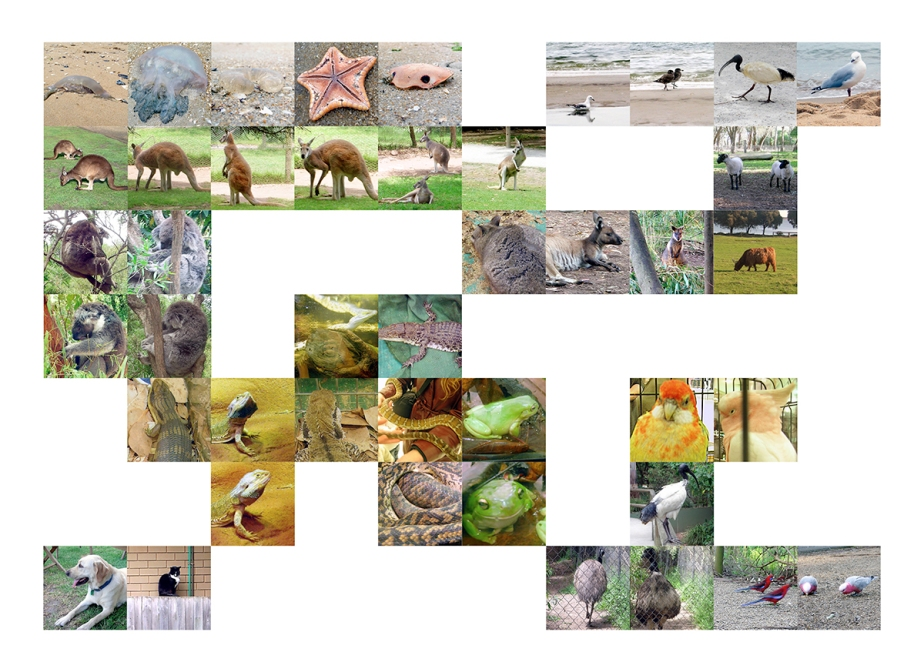 animals_collage